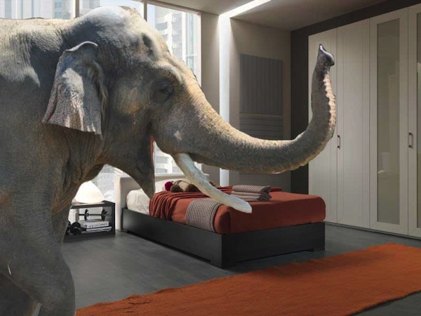 Elephant in the bedroom!